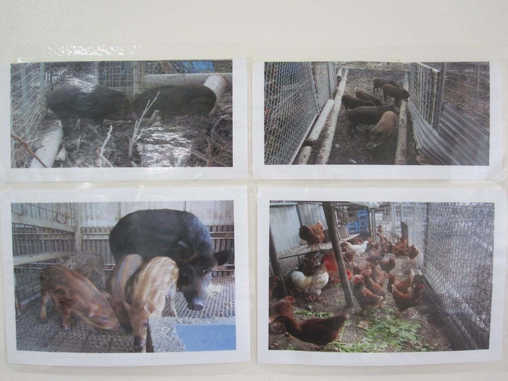 壁に貼られた飼育する家畜の写真