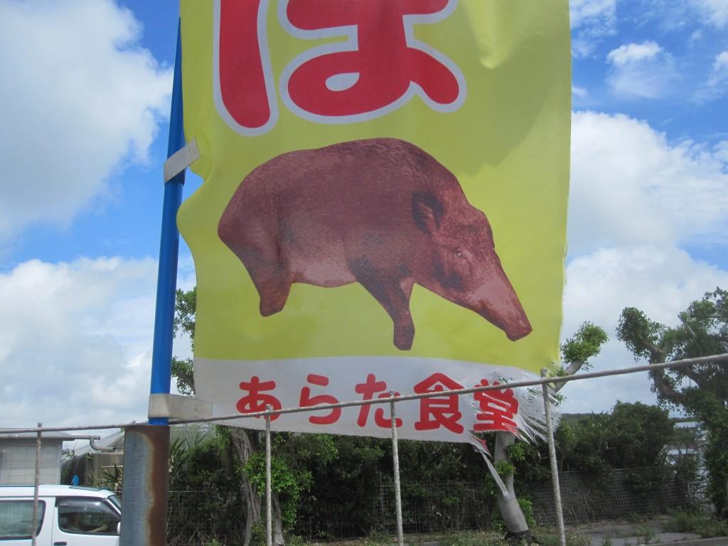 豚(ブタ)のリアルイラスト