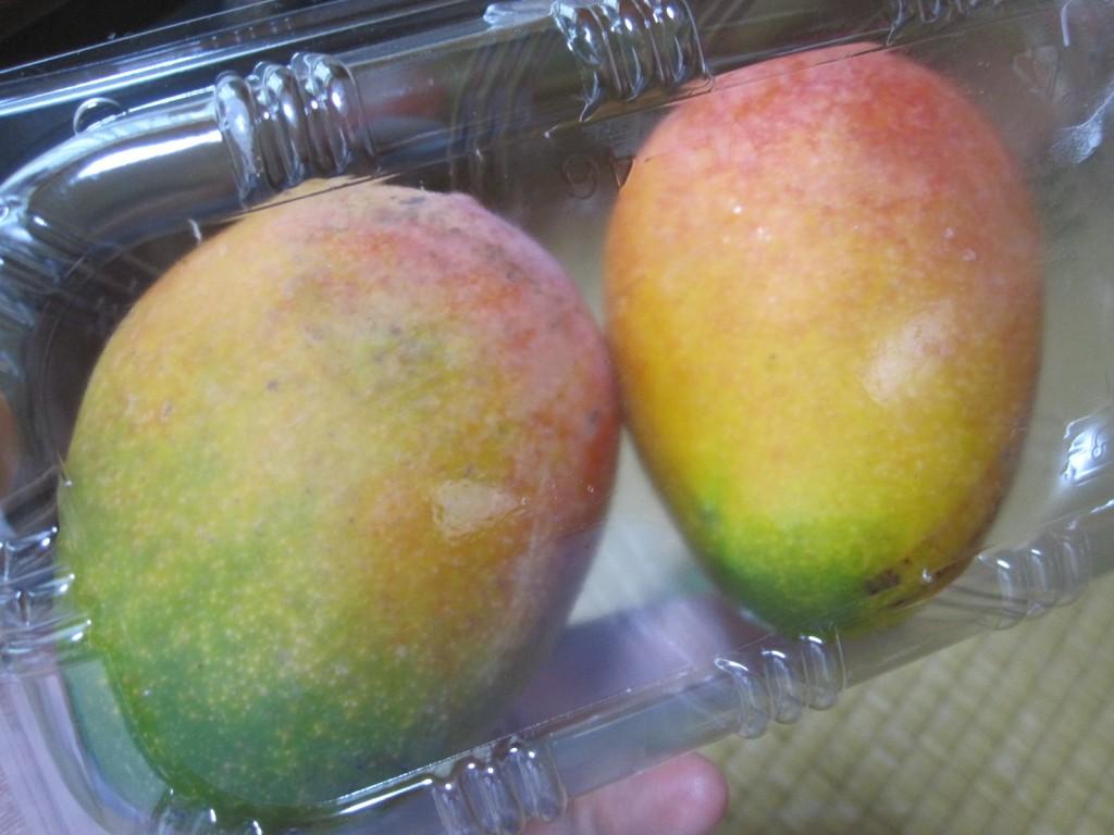 徐々に皮に光沢が出始めたマンゴー