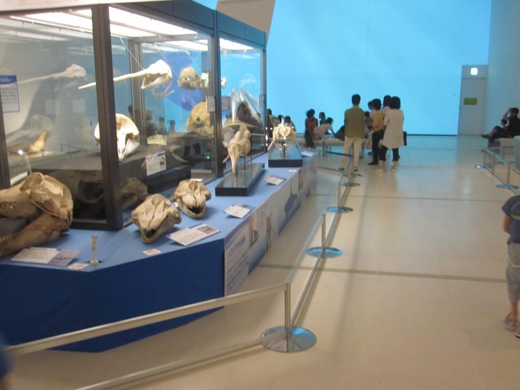 2015年に訪れた沖縄県立博物館「大哺乳類展ぼくらのなかまたち」(自主企画事業)