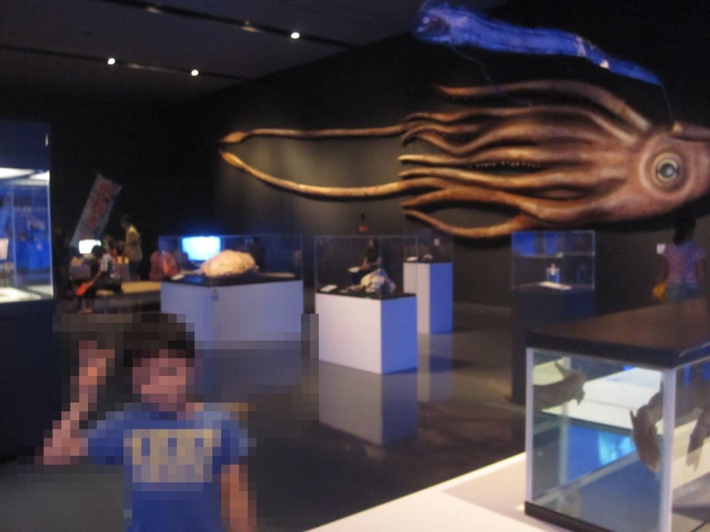 2015年に開催された沖縄県立美術館「深海探検 海底二万里の世界」