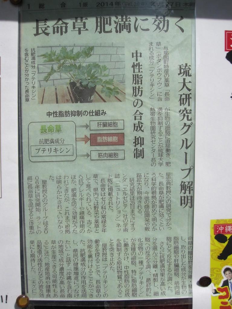 新聞記事「長命草が肥満に効く」の切り抜き