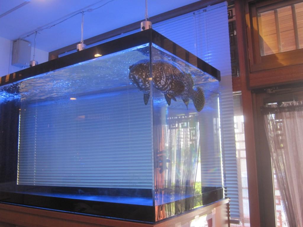 大きな水槽の中で優雅に泳ぐ魚