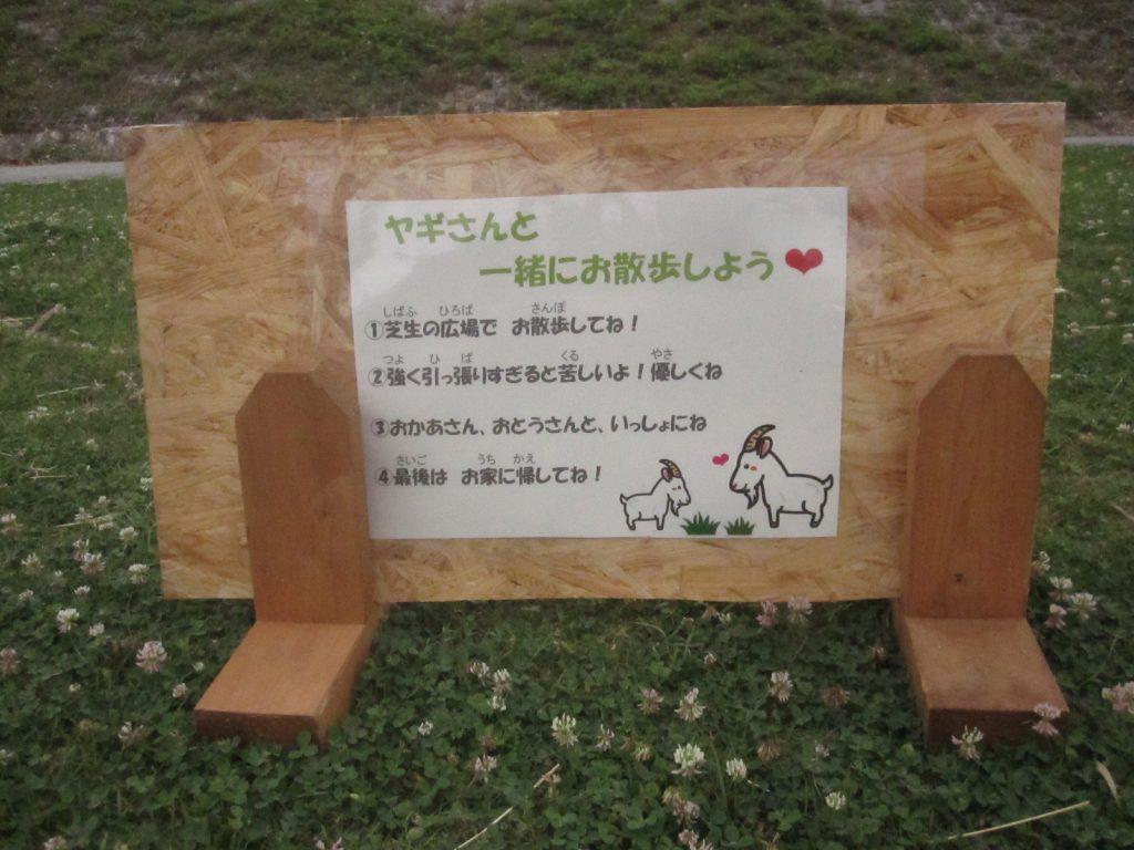 芝生の広場でヤギと散歩できるサービスもある