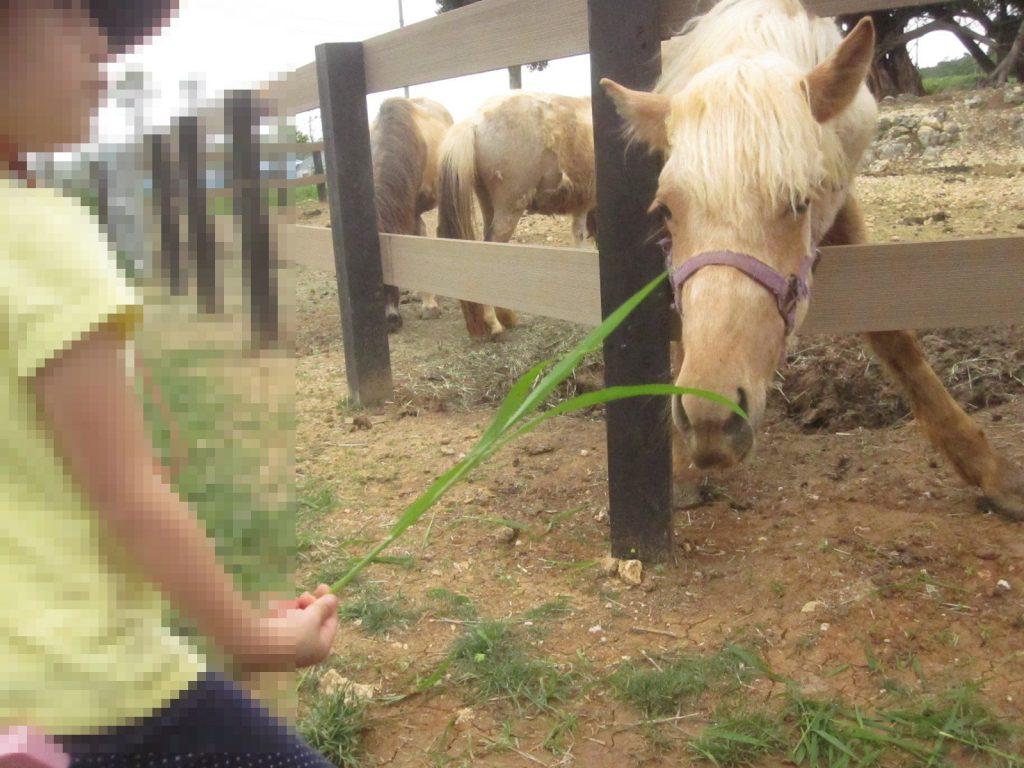 草でポニーの鼻をコソコソくすぐったりしないでください