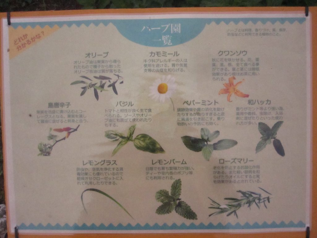 カモミール、バジル、ミント、レモングラスなど多くのハーブが育っている