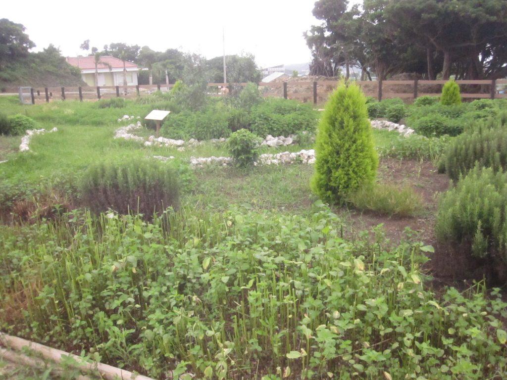 たくさんのハーブが植えられたハーブ園