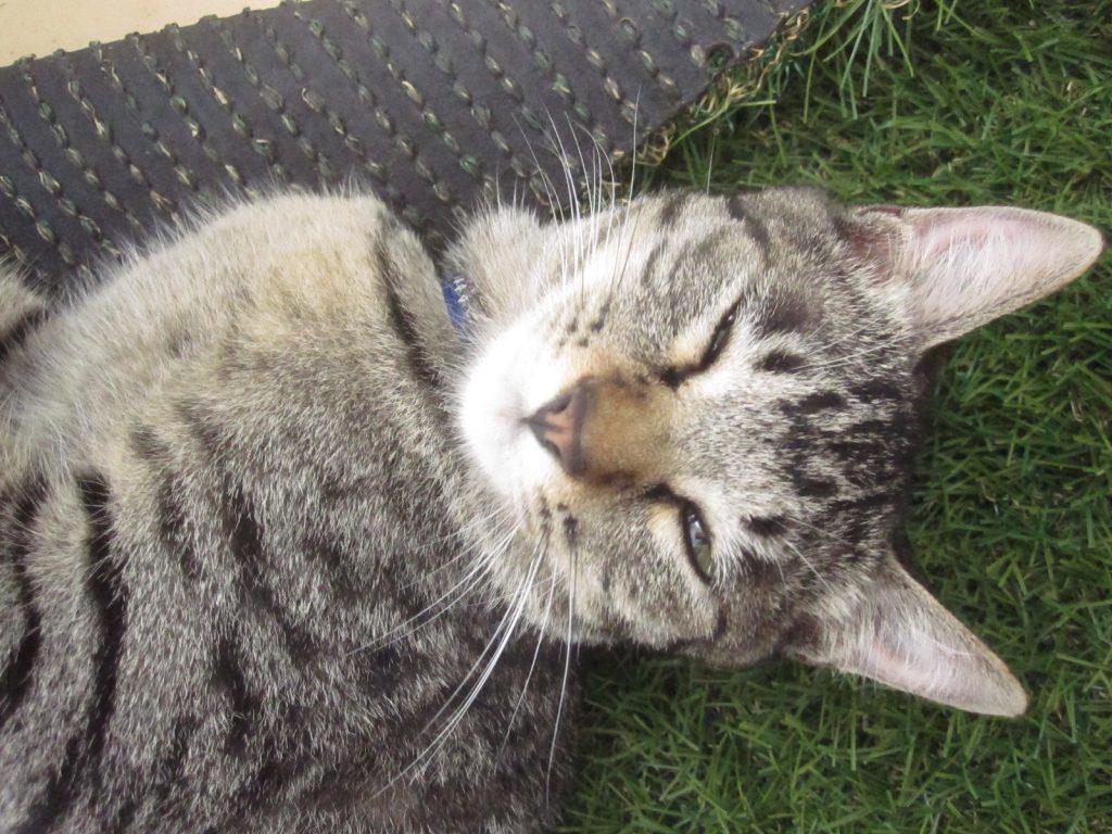 人間に撫でられてご満悦の気持ちよさそうな猫の表情(笑)