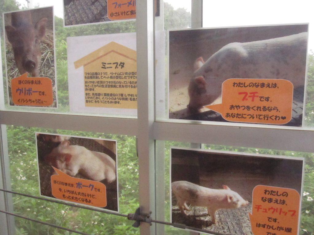 飼育員作成の動物紹介コーナーには名前や説明書きがある