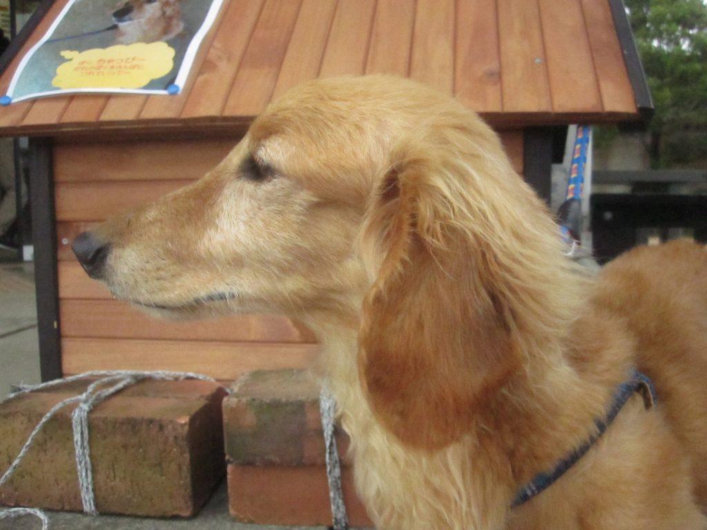 他の動物異常に大人気だったのが犬(ミニチュアダックスフンド?)