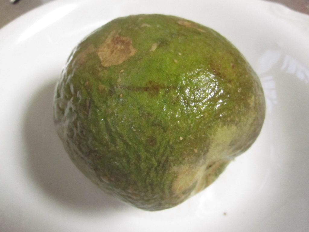 トロピカルフルーツのシロサポテ(ホワイトサポテ)