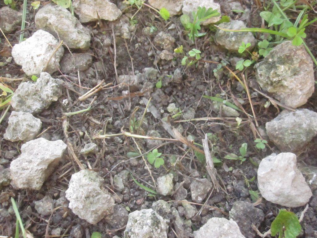 土をかぶせて位置が分かるように石で囲んでみた