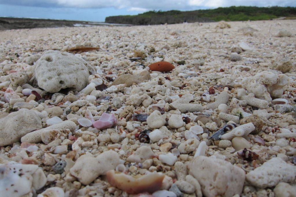 海岸・浜辺ビーチのサンゴ(珊瑚)や貝殻
