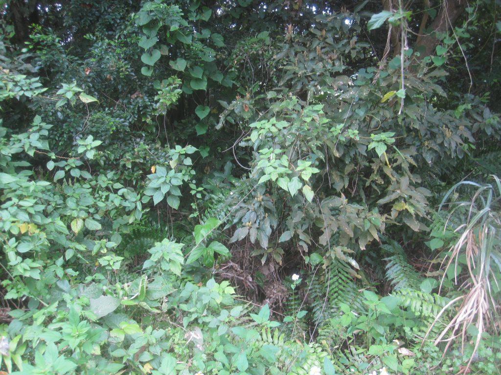 うっそうと樹木が茂って蚊や蜂が飛んでいたり、毒蛇ハブの活動も怖い