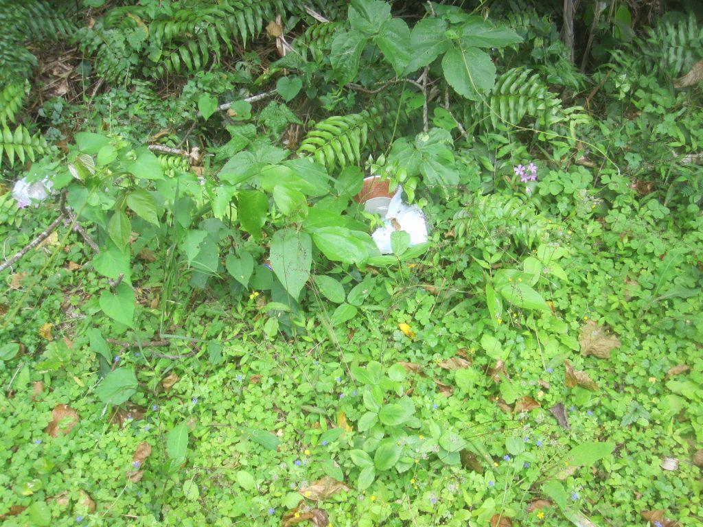 草むらの中にゴミが投げ捨てられていて汚い