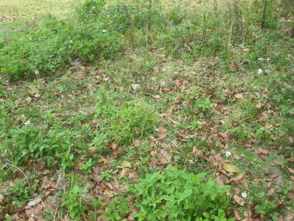雑草が伸び放題で荒れ果てた公園の