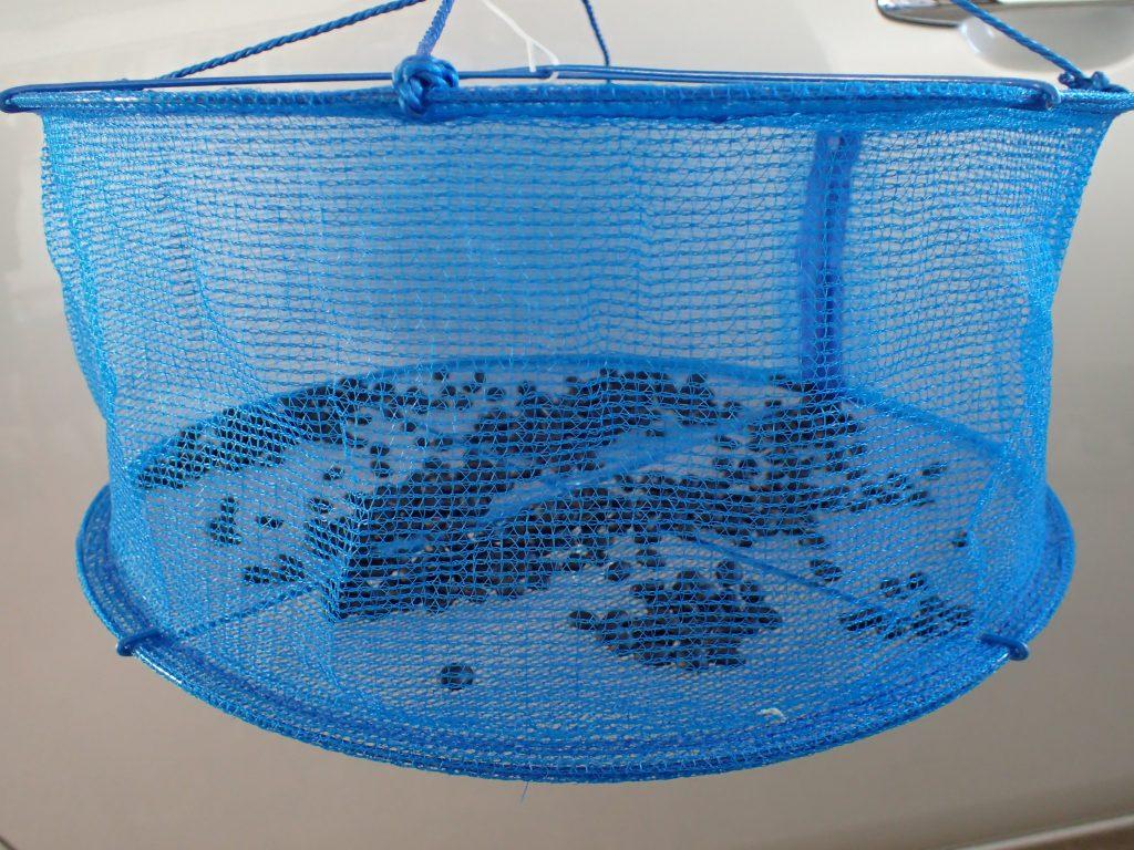 ダイソーで売ってる天日干しネットでコーヒー豆を乾燥させる