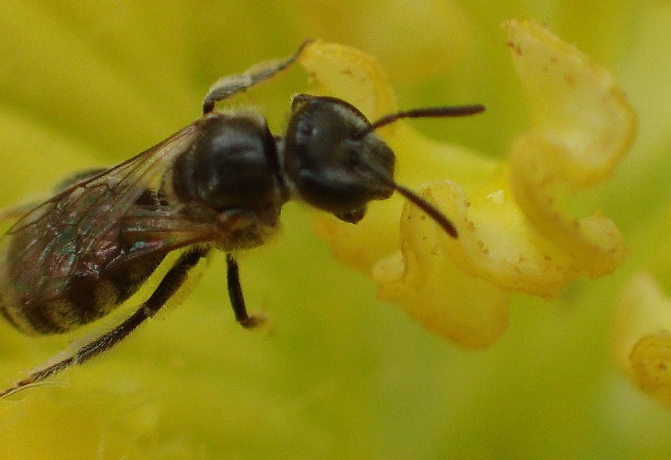 蜂(ハチ)が花の蜜を集めていた