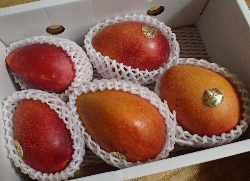 白いフルーツキャップに包まれた赤いマンゴー(アーウィン種)