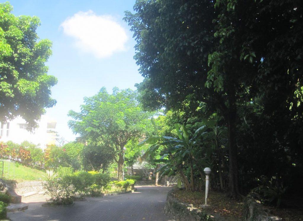 木々が影を作り涼しい浦添美術館へ続く道