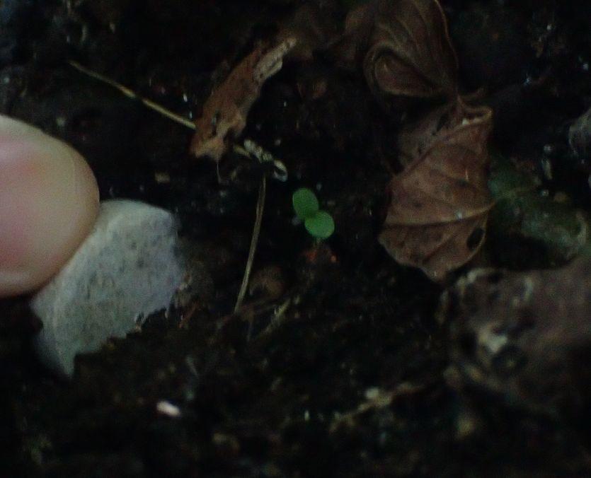 土に押し込んで埋める使い方もできる