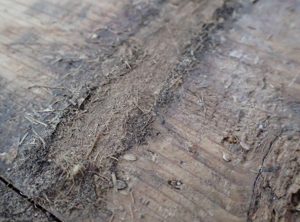 畳と畳の隙間から食べカス?飲み物?が入り込んで板が変形した箇所
