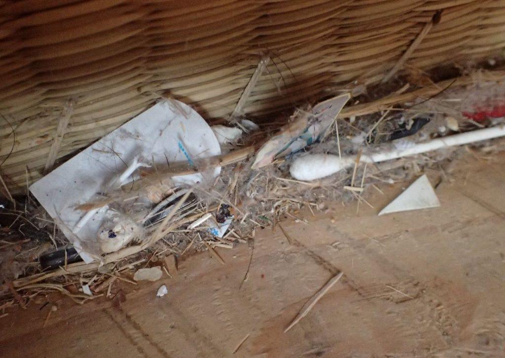 畳の下に溜まったゴミ、ホコリの写真