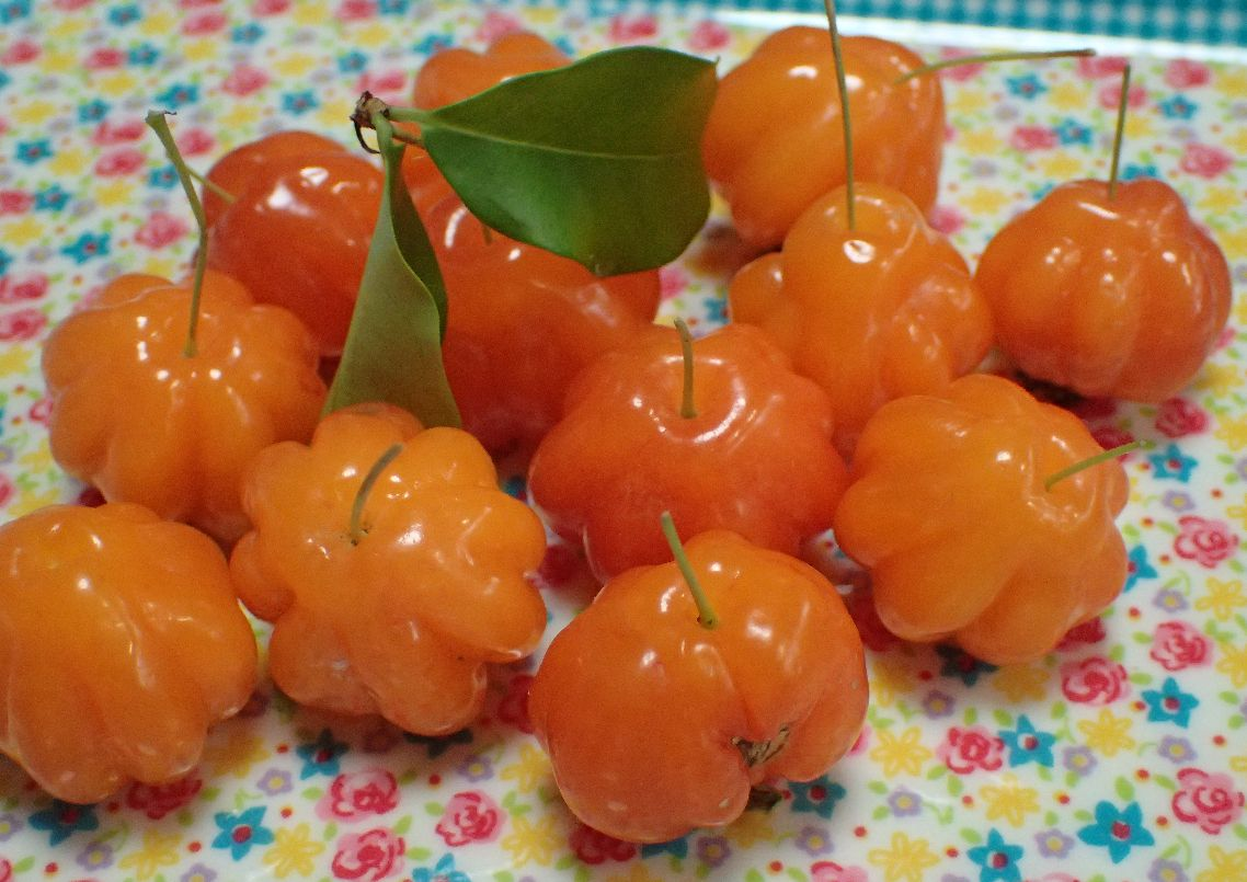 熟する前に早めに収穫したピタンガの果実