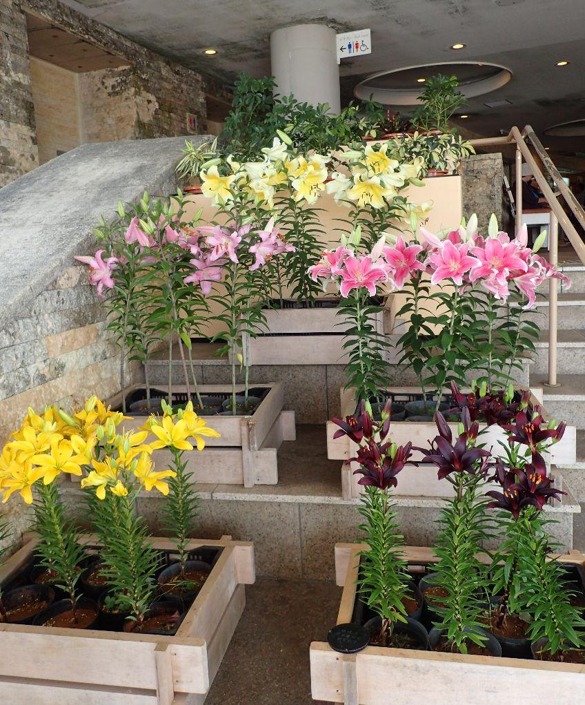 ゆり祭り開催中ということで綺麗に咲いた花が出迎えてくれる