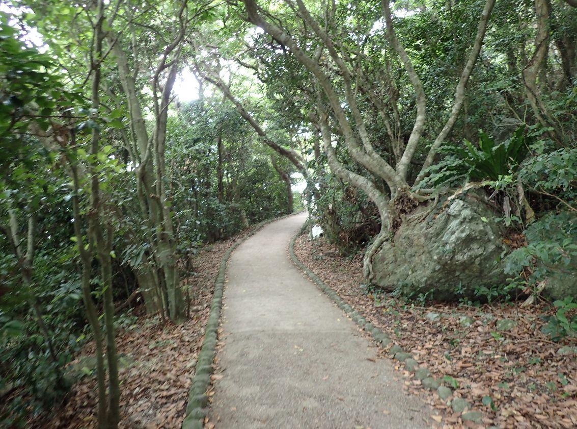 伊江島タッチューの頂上へ続く山道