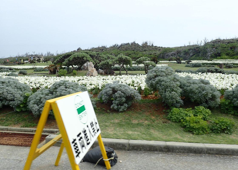 大勢の観光客で賑わっていた伊江島ゆり祭り会場