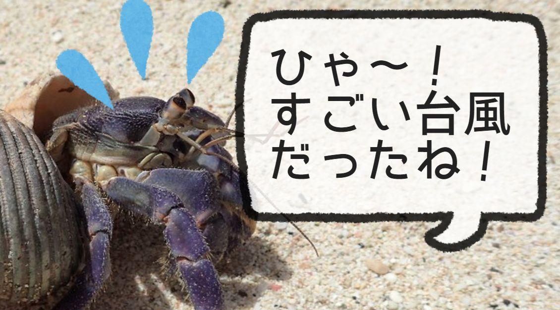 ムラサキオカヤドカリ「ひゃー!すごい台風だったね!」