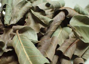 香りが立った葉を蒸らして