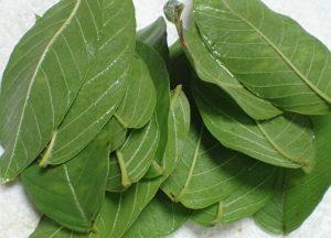 水で洗ったグアバ・バンシルーの葉