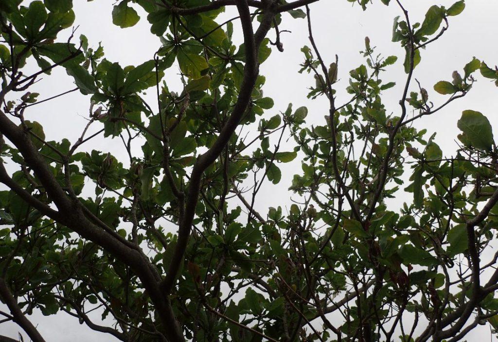 樹木の葉や枝に無数の毒毛虫が大発生していた