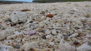 沖縄の海岸で採取禁止なのはサンゴだけじゃない!割れたガラス片のビーチグラス・シーグラスも同じ扱いですよ!