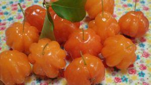 アセロラに似た沖縄の果実ピタンガを栽培する時に注意すべき点は、害虫・病気ではなくドロボウと日光に当たる場所に植えること!