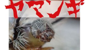 蛾の幼虫(毒毛虫)ヤマンギ